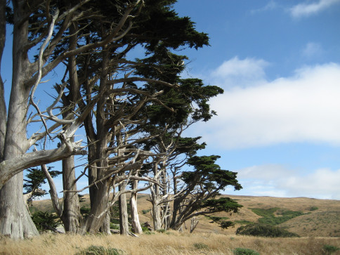 point-reyes-trees